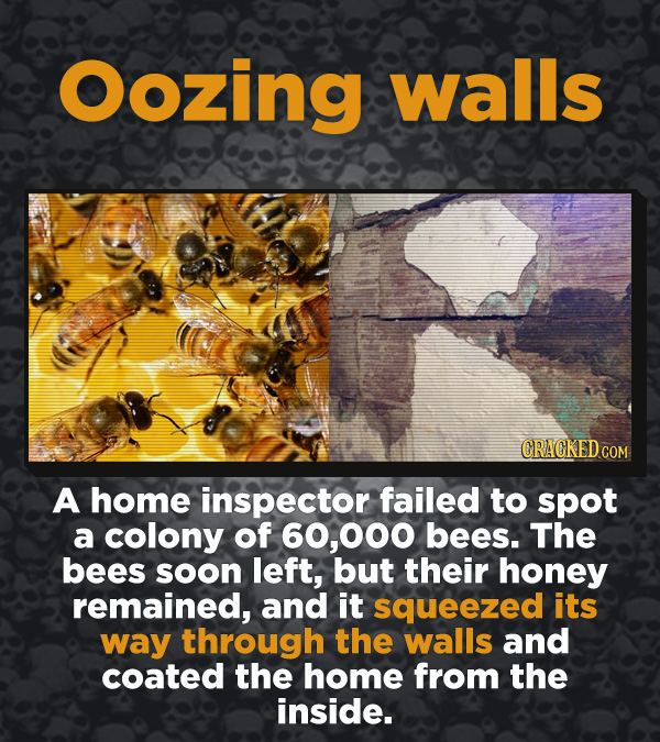Creepy Discoveries That People Stumbled Into - A home inspector failed to spot a colony of 60,000 bees. The bees soo left, but their honey remained, a