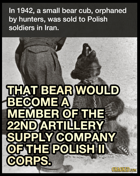In 1942, a small bear cub, orphaned by hunters, was sold to Polish soldiers in Iran. THAT BEAR WOULD BECOME A MEMBER OF THE 22ND ARTILLERY SUPPLY COMP