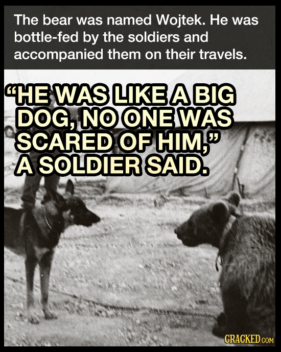 The bear was named Wojtek. He was bottle-fed by the soldiers and accompanied them on their travels. HE WAS LIKE A BIG DOG, NO ONE WAS SCARED OF HIM,