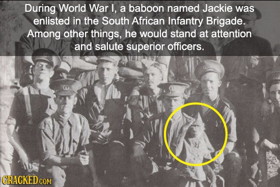 During World War I, a baboon named Jackie was enlisted in the South African Infantry Brigade. Among other things, he would stand at attention and salu