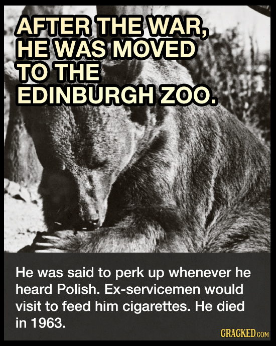AFTER THE WAR, HE WAS MOVED TO THE EDINBURGH ZOO. He was said to perk up whenever he heard Polish. Ex-servicemen would visit to feed him cigarettes. H
