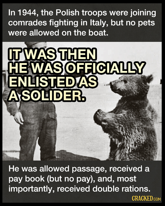 In 1944, the Polish troops were joining comrades fighting in Italy, but no pets were allowed on the boat. IT WAS THEN HE WAS OFFICIALLY ENLISTEDAS ASO