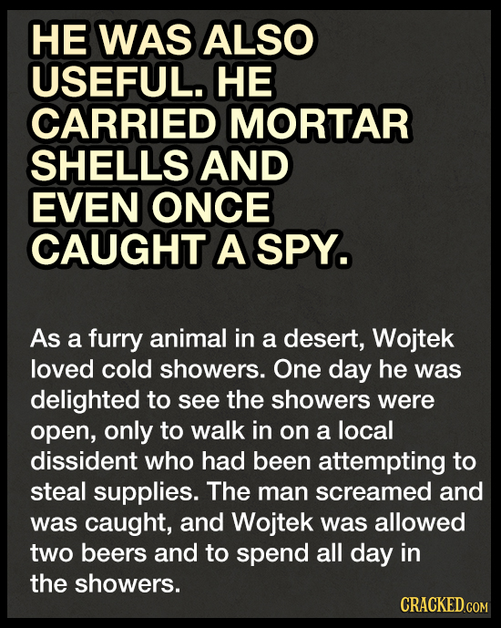 HE WAS ALSO USEFUL. HE CARRIED MORTAR SHELLS AND EVEN ONCE CAUGHT A SPY. As a furry animal in a desert, Wojtek loved cold showers. One day he was deli