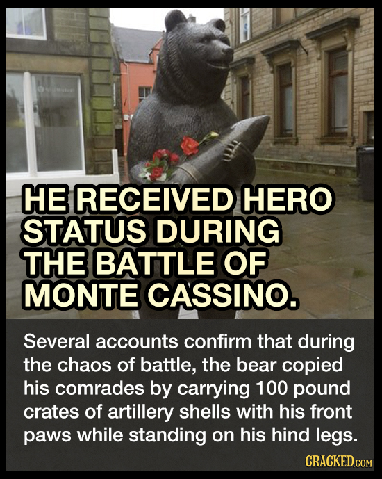 HE RECEIVED HERO STATUS DURING THE BATTLE OF MONTE CASSINO. Several accounts confirm that during the chaos of battle, the bear copied his comrades by