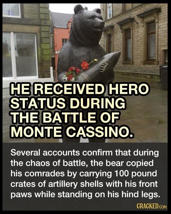 The Bear That Fought In World War II