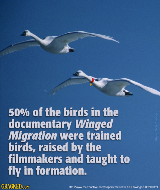 50% of the birds in the documentary Winged Creative Migration were trained Getty birds, raised by the Photo: filmmakers and taught to fly in formation