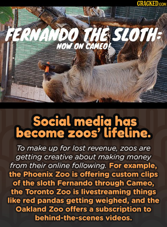 CRACKED.COM FERNANDO THE SLOTH: NOW ON CAMEO! Social media has become ZOOS' lifeline. To make up for lost revenue, ZOOS are getting creative about mak