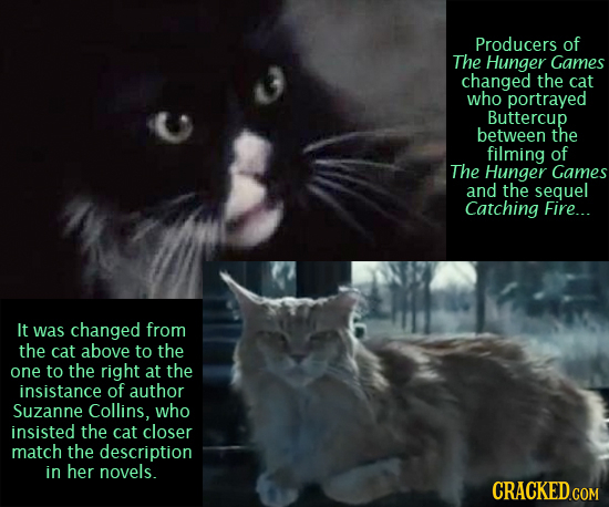 Producers of The Hunger Games changed the cat who portrayed Buttercup between the filming of The Hunger Games and the sequel Catching Fire... It was c