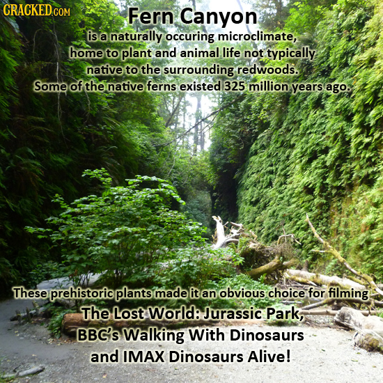 CRACKED.COM Fern Canyon is a naturally occuring microclimate, home to plant and animal life not typically native to the surrounding redwoods. Some of