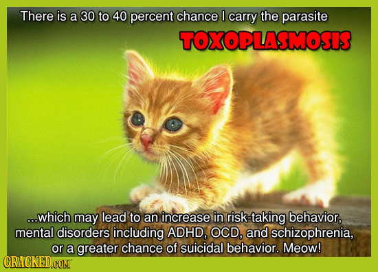 There is a 30 to 40 percent chance 0 carry the parasite TOXOPLASMOSIS ...which may lead to an increase in risk-taking behavior, mental disorders inclu