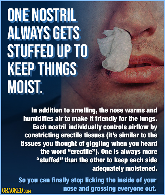 ONE NOSTRIL ALWAYS GETS STUFFED UP TO KEEP THINGS MOIST. In addition to smelling, the nose warms and humidifies air to make it friendly for the lungs.