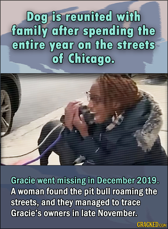 15 Feel Good Stories Of 2020 To End This Wretched Year - Dog is reunited with family after spending the entire year on the streets of Chicago.  Gracie