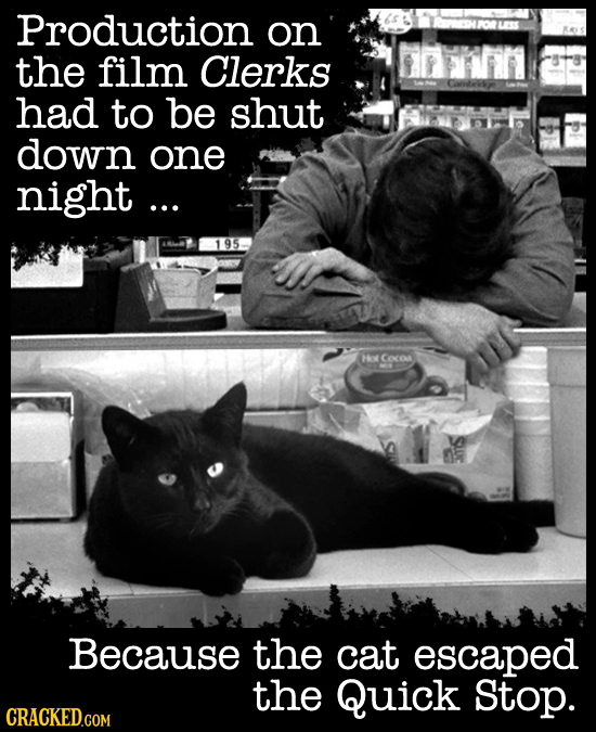 Production on the film Clerks had to be shut down one night... 195 Hov Coces Because the cat escaped the Quick Stop. CRACKED.GOM
