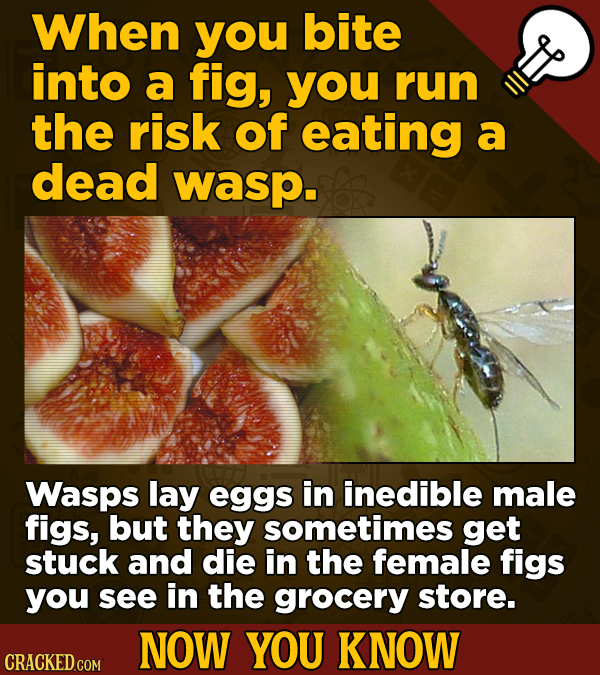 When you bite into a fig, you run the risk of eating a dead wasp. Wasps lay eggs in inedible male figs, but they sometimes get stuck and die in the fe