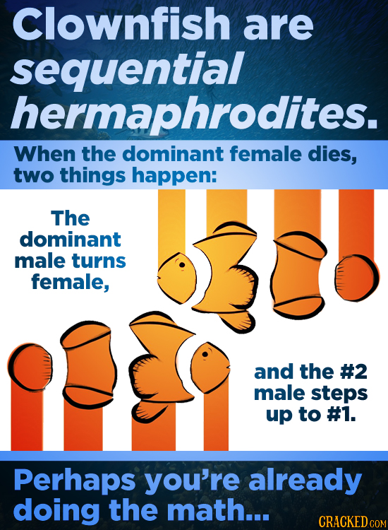 Clownfish are sequential hermaphrodites. When the dominant female dies, two things happen: The dominant male turns female, and the #2 male steps up to