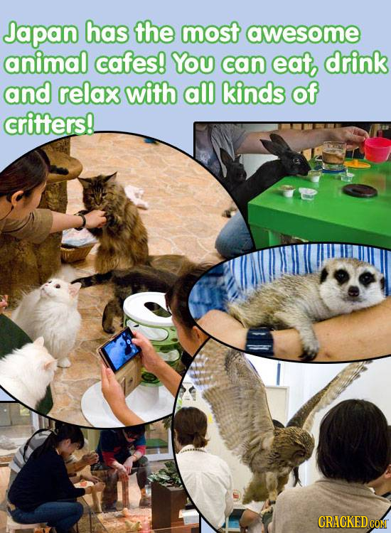 Japan has the most awesome animal cafes! YOU can eat drink and relax with all kinds of critters!. CRACKEDCON