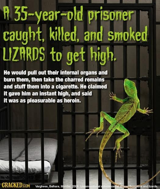 A 35-year-old prisoner caught, killed, and smoked LIZARDS to get high. He would pull out their internal organs and burn them, then take the charred re