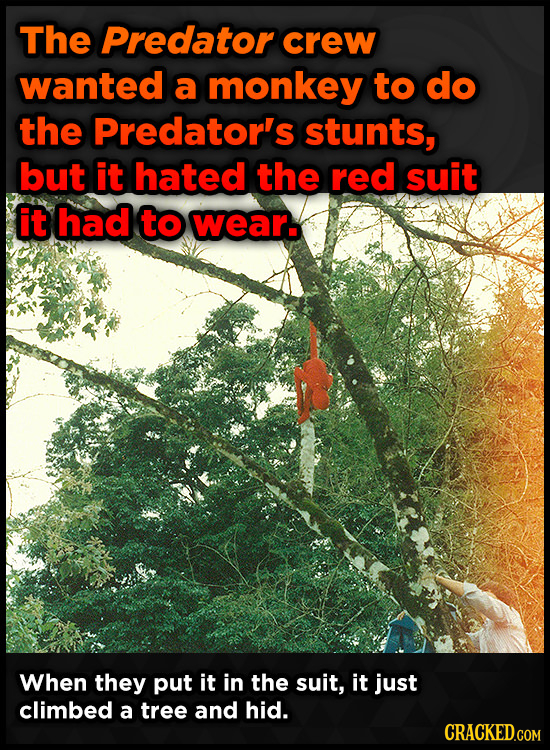 The Predator crew wanted a monkey to do the Predator's stunts, but it hated the red suit it had to wear. When they put it in the suit, it just climbed