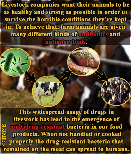 Livestock companies want their animals to be as healthy and strong as possible in order to survive the horrible conditions they're kept in. To achieve