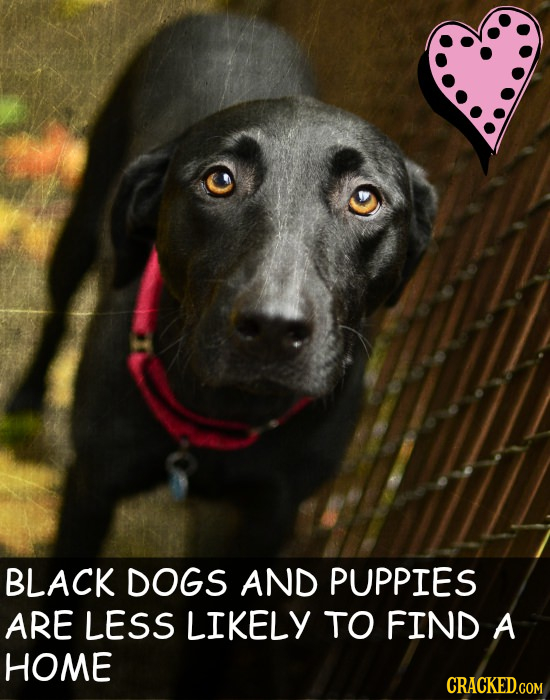 BLACK DOGS AND PUPPIES ARE LESS LIKELY TO FIND A HOME CRACKED.COM