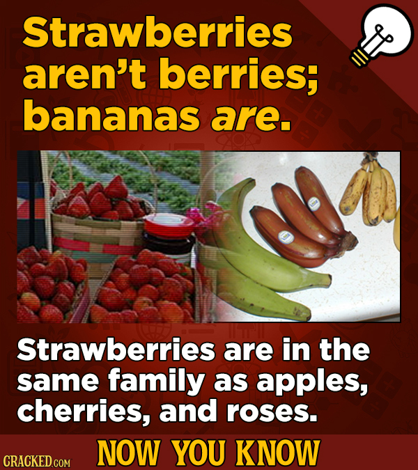 Strawberries aren't berries; bananas are. Strawberries are in the same family as apples, cherries, and roses. NOW YOU KNOW CRACKED COM