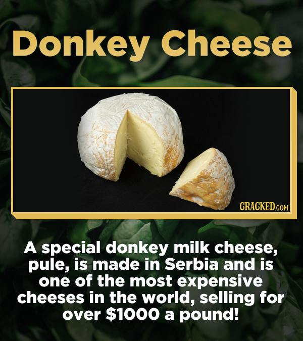 Donkey Cheese A special donkey milk cheese, pule, is made in Serbia and is one of the most expensive cheeses in the world, selling for over $1000 a po