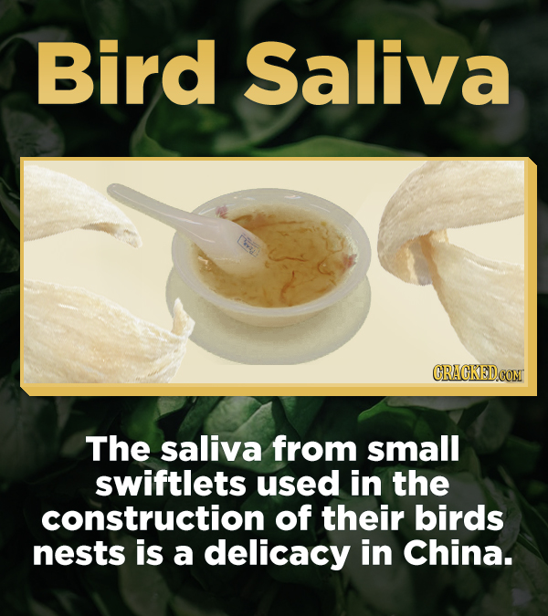 Bird Saliva CRACKEDCON The saliva from small swiftlets used in the construction of their birds nests is a delicacy in China.