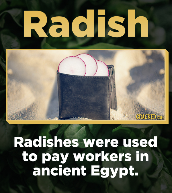Radish CRACKED COM Radishes were used to pay workers in ancient Egypt.