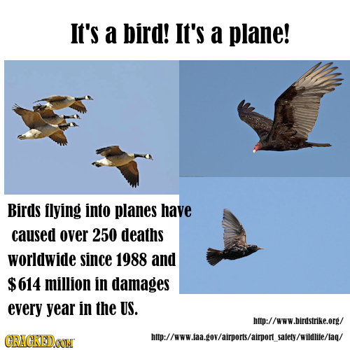 It's a bird! It's a plane! Birds llying into planes have caused over 250 deaths worldwide since 1988 and $614 million in damages every year in the US.