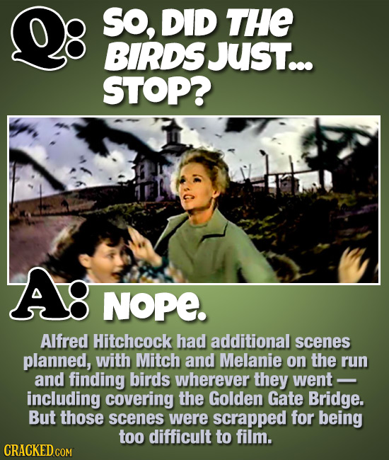 SO, DID THE BIRDS Just... STOP? Ag NOPE. Alfred Hitchcock had additional scenes planned, with Mitch and Melanie on the run and finding birds wherever