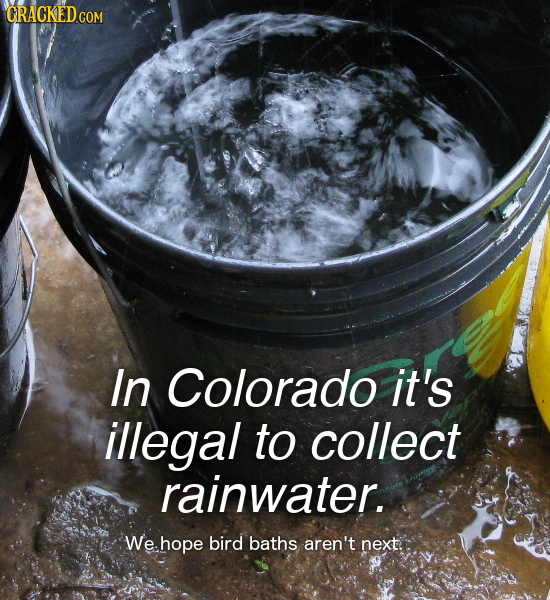 In Colorado it's illegal to collect rainwater. We. hope bird baths aren't next.