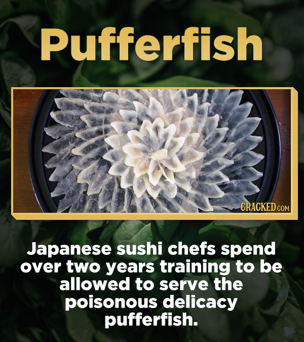 Pufferfish Japanese sushi chefs spend over two years training to be allowed to serve the poisonous delicacy pufferfish.