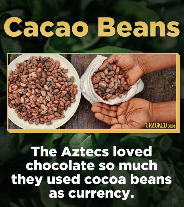Cacao Beans The Aztecs loved chocolate sO much they used cocoa beans as curreNCY.