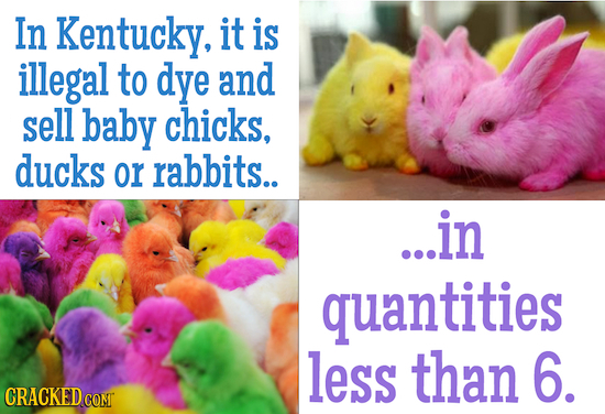 In Kentucky, it is illegal to dye and sell baby chicks, ducks or rabbits.. ...in quantities less than 6. CRACKEDCO COMT