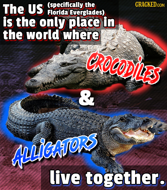 The US (specifically the CRACKED.COM Florida Everglades) is the only place in the world where CROCODILES & ALLIGAFORS live together.