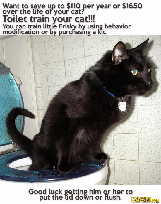Want to save up to $110 per year or $1650 over the life of your cat? Toilet train your cat!!! You can train little Frisky by using behavior modificati
