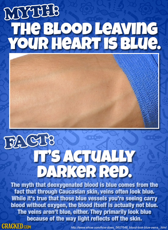 MYTH: THE BLOOD LEAVING YOUR HEART IS BLUE. FAGT8 IT'S ACTUALLY DARKER RED. The myth that deoxygenated blood is blue comes from the fact that through