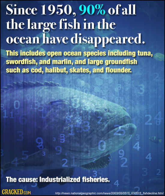 Since 1950, 90% ofall the large fish in the ocean have disappeared. This includes open ocean species including tuna, swordfish, and marlin, and large