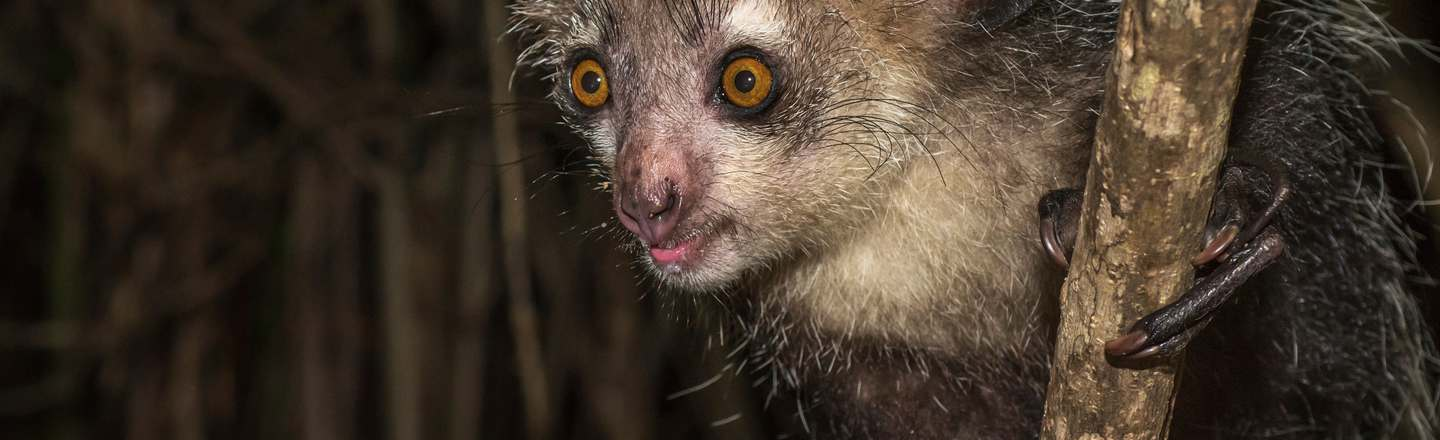 25 Animals IRL That Will Haunt Your Dreams
