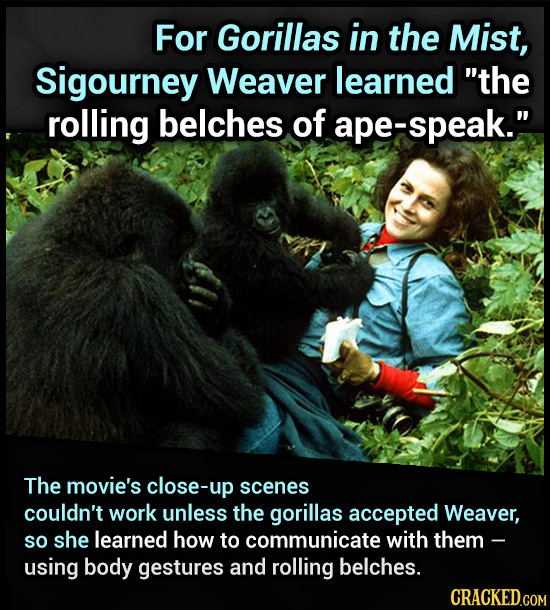 For Gorillas in the Mist, Sigourney Weaver learned the rolling belches of ape-speak. The movie's close-up scenes couldn't work unless the gorillas a