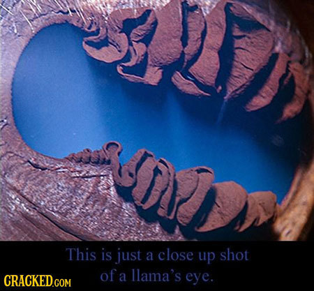 This is just a close up shot of llama's CRACKED.COM a eye.