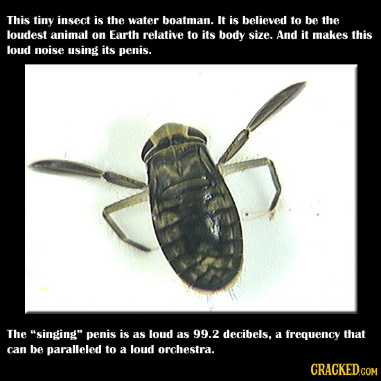 28 Real Animal Abilities You Won't Believe