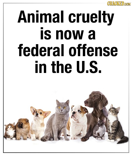 CRAGKEDao Animal cruelty is now a federal offense in the U.S.