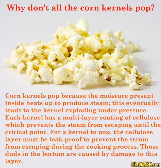 Why don't all the corn kernels pop? Corn kernels pop because the moisture present inside heats up to produce steam; this eventually leads to the kerne
