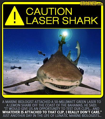 ORACKEDOOM CAUTION I! LASER SHARK A MARINE BIOLOGIST ATTACHED A 50-MILLIWATT GREEN LASER TO A LEMON SHARK OFF THE COAST OF THE BAHAMAS. HE SAID: IT W