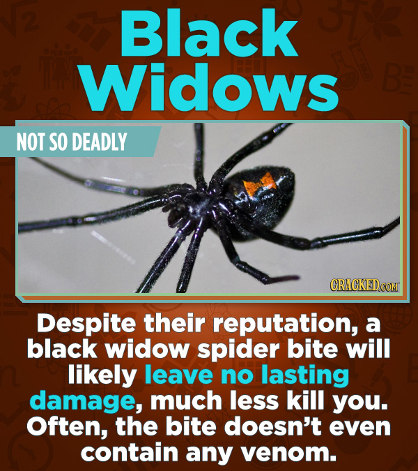 Statistics That Change How You See the World -  Despite their reputation, a black widow spider bite will likely leave no lasting damage, much less kil