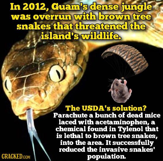 In 2012, Guam's dense jungle was overrun with brown tree snakes that threatened the island's wildlife. The USDA'S solution? Parachute a bunch of dead