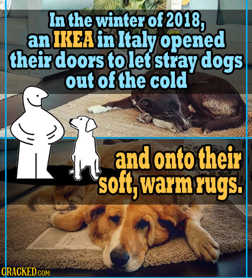 In the winter of 2018, an IKEA in Italy opened their doors to let stray dogs out of the cold and onto their soft, warm rugs. CRACKED.COM