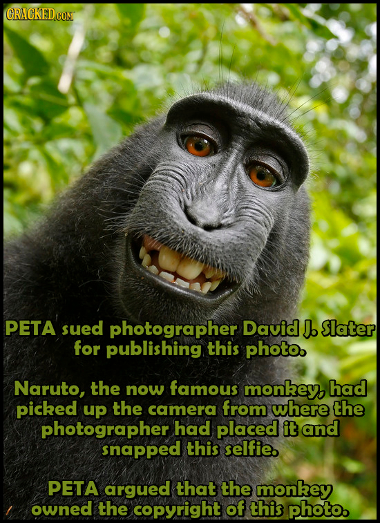 PETA sued photographer David J. Slater for publishing this photo. Naruto, the now famous monkey, had picked up the camera from where the photographer
