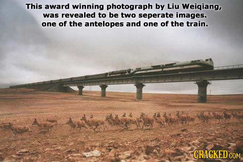 This award winning photograph by Liu Weigiang, was revealed to be two seperate images. one of the antelopes and one of the train. CRACKED COM